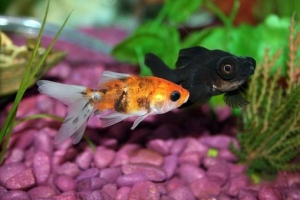 Aquarium Led Verlichting kopen met Sale korting? Bekijk Uitverkoop!